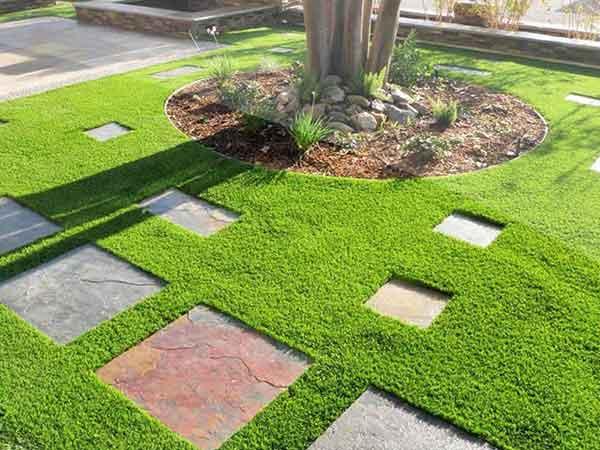 Cỏ trang trí sân vườn