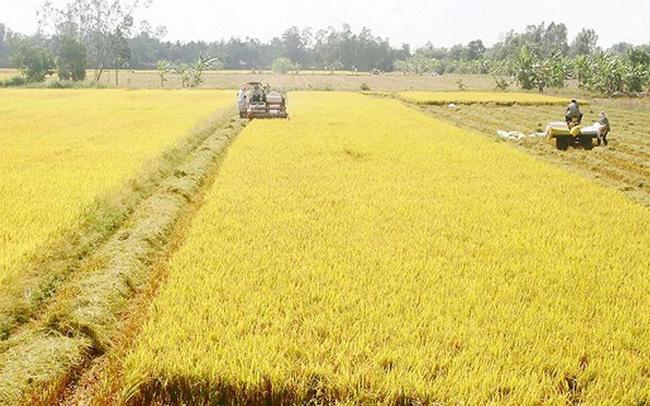 Đồng Tháp chuyển đổi 31,41ha đất trồng lúa sang đất phi nông nghiệp