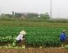 """Dự án bỏ hoang tại Hà Nội: Nhiều chủ đầu tư… """"mất tích"""""""