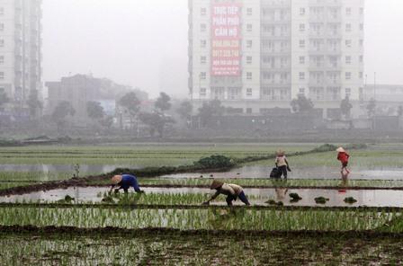 Đất nông nghiệp đang bị thu hẹp.
