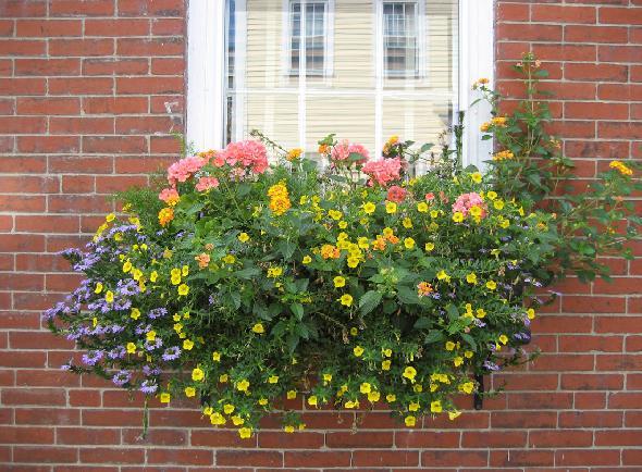 Bồn hoa cửa sổ: giải pháp hoàn hảo cho không gian hẹp