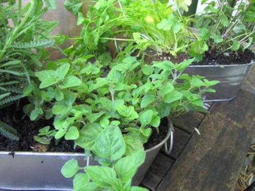 Tự tạo vườn treo xanh mát trước nhà