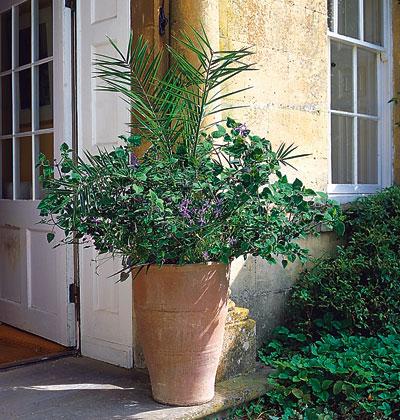 Hoa đẹp bên hiên nhà