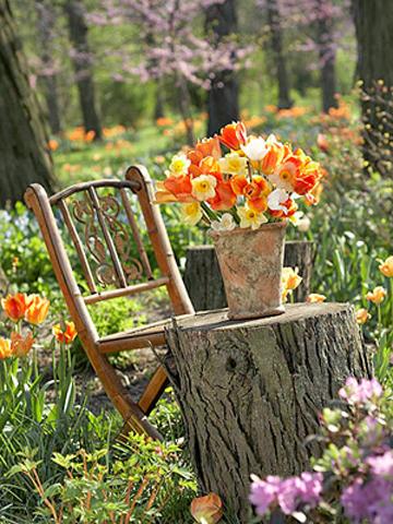 Góc vườn mùa hè rực rỡ