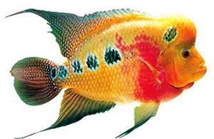 ca canh 1347620294 Chú ý khi lắp đặt bể cá và lựa chọn loại cá cảnh để nuôi